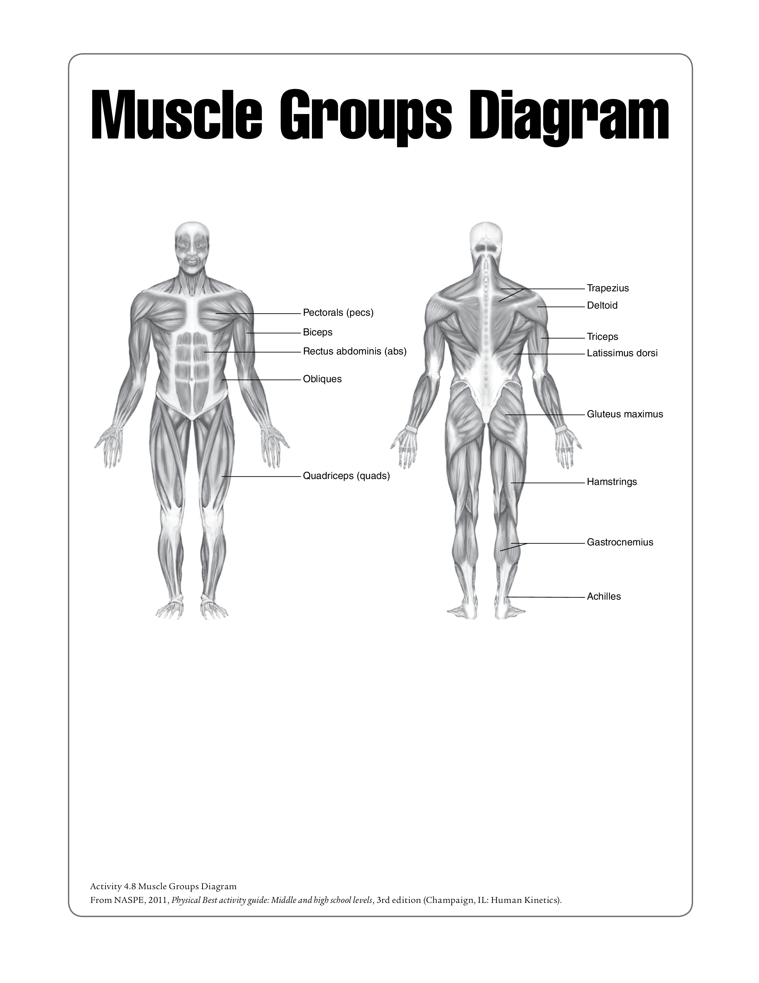 Free Human Muscle Chart Templates At Allbusinesstemplates