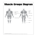 template topic preview image Human Muscle Chart