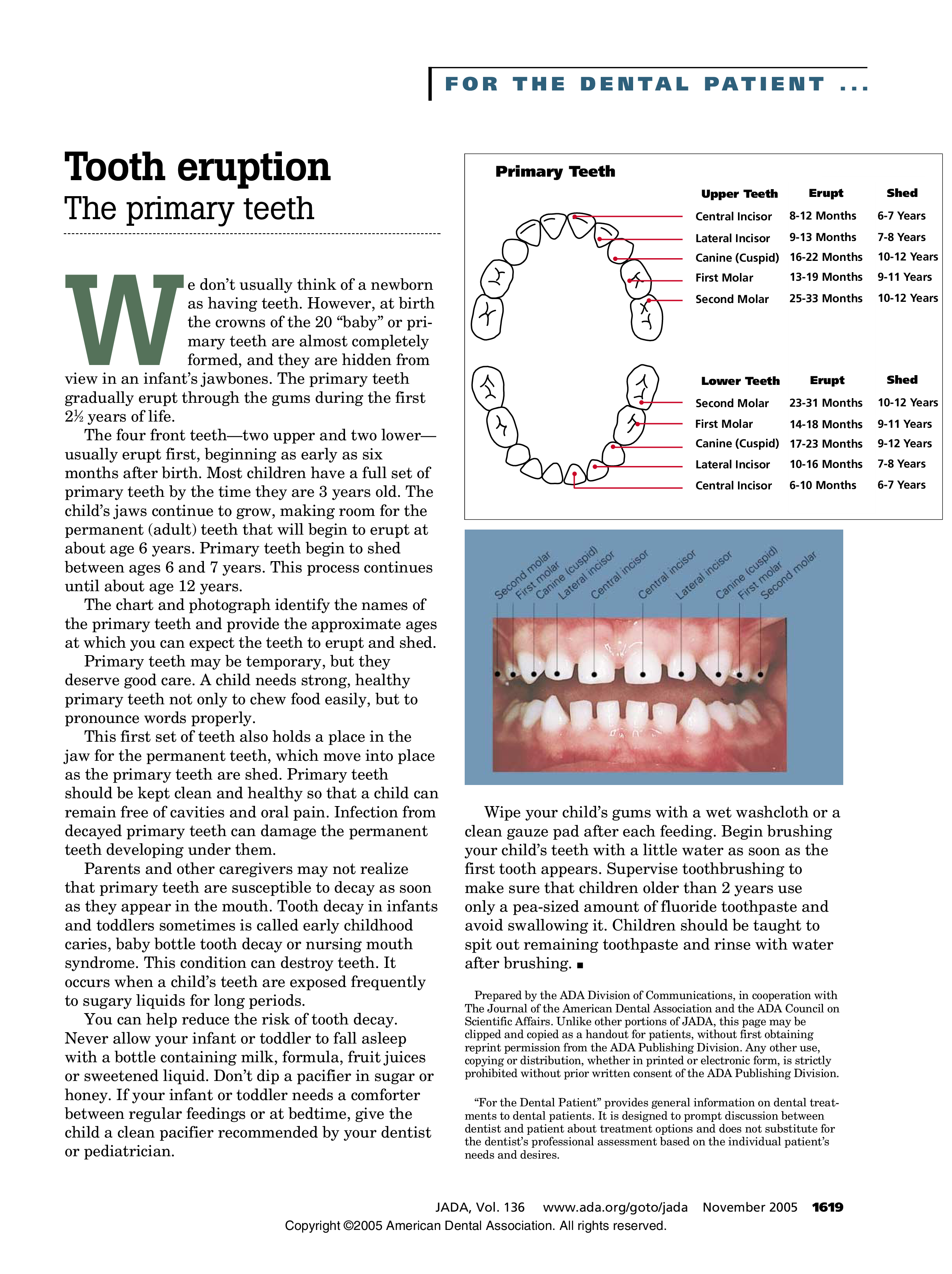 Baby Tooth Loss Chart